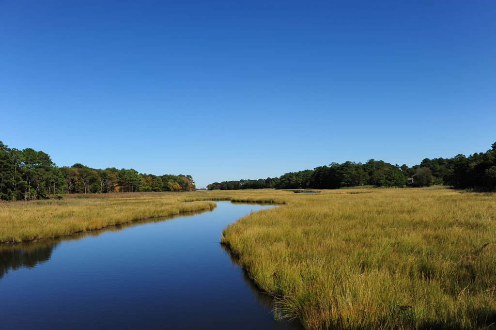 Saltmarsh at Breakwater Junction Trail